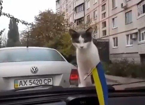 そらをとぶネコ