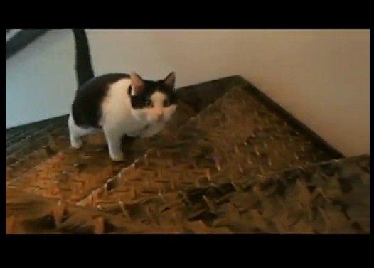 文句を言いながら階段をあがる猫