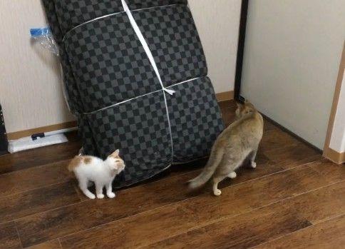 新入り子猫と鬼ごっこして背後を取られる先住猫