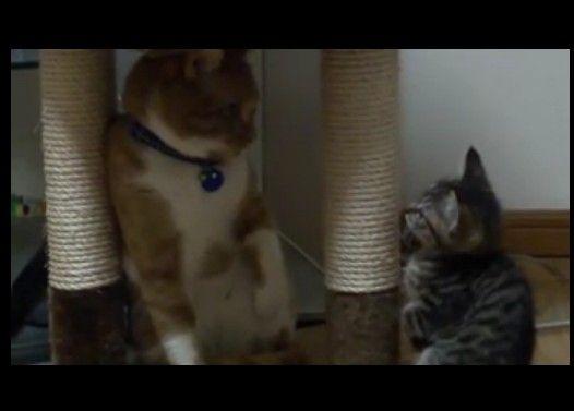 猫をからかう子猫