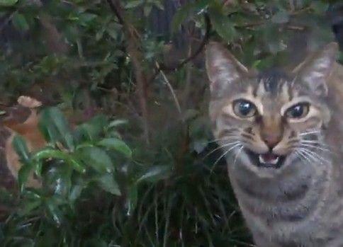 野良母猫、娘猫に稽古をつける