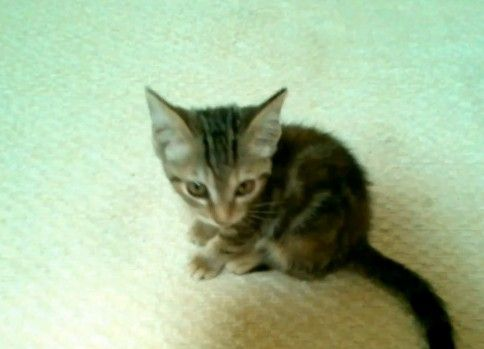 鳴きながら追っかけて来る子猫が超絶カワイイ