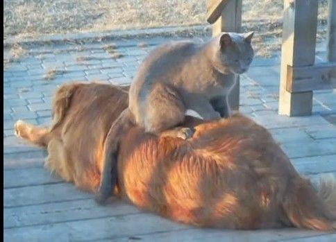 猫のモミモミはどんな犬も骨抜きにする