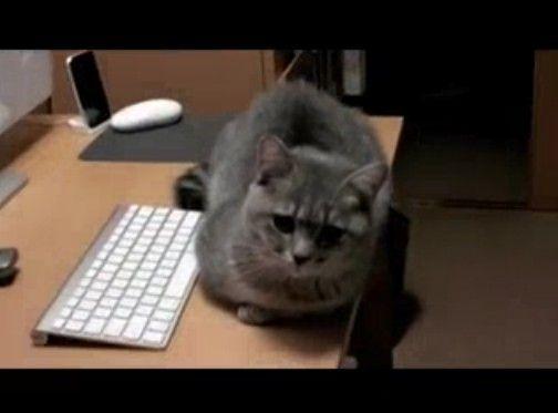 パソコンをやらせなくして遊んでくれと訴えかけてるぬこ
