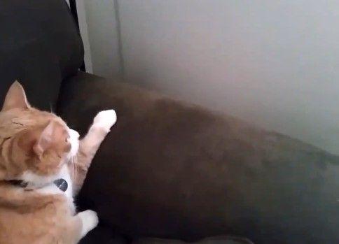 申し訳なさそうな猫が完全勝利した瞬間