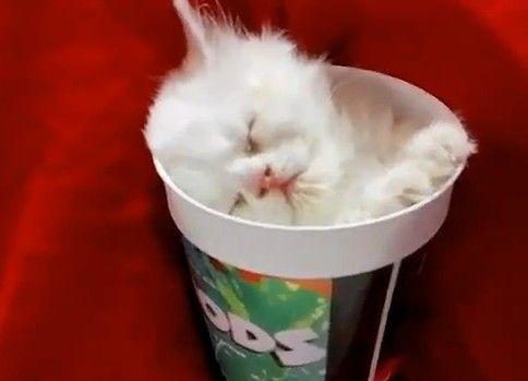 カップでスヤスヤの子猫が可愛い(-ω-)