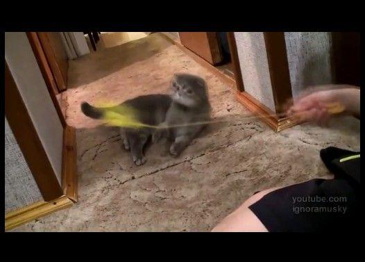 インターホンの音にビックリして立ちすくむ子猫