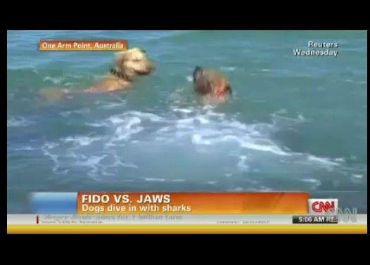 犬が海に飛び込みサメ退治?