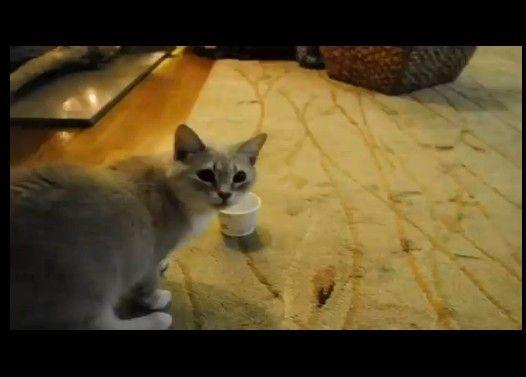 ヨーグルトのカップが口から離れなくなった猫