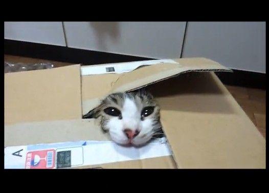 うちの猫が脱出ゲームにハマってしまったらしい