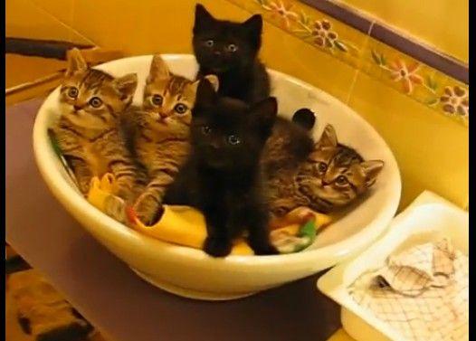 【脅威のシンクロ率】一斉に同じ方向を向く仔猫たち