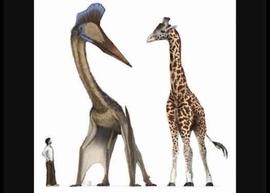 絶滅した奇妙な古代生物