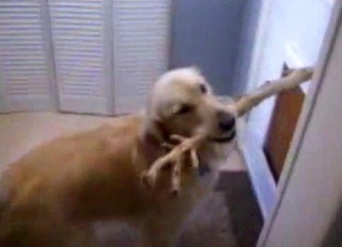 出られない犬