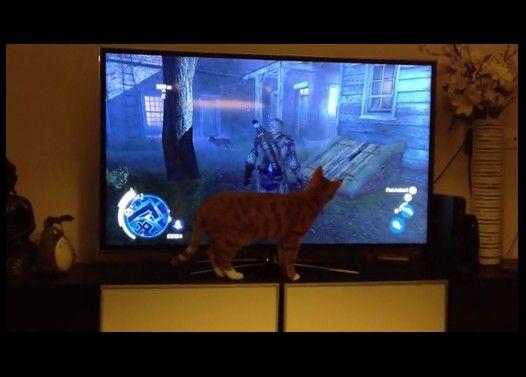 アサシンクリードの映像を見た猫の反応
