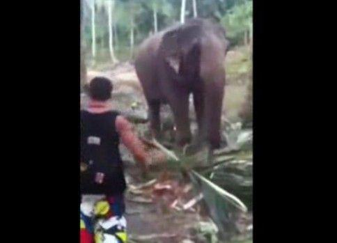 ゾウに鼻パンチを食らい吹っ飛んだ男性