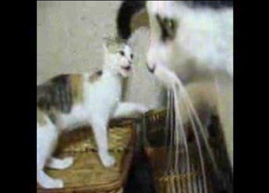子猫vsしっぽ