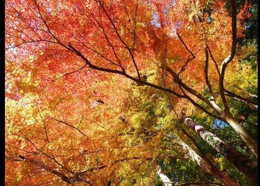 手のひらいっぱいの秋を感じる画像集