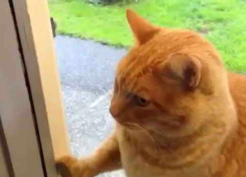 ピンポンを鳴らしてくる猫