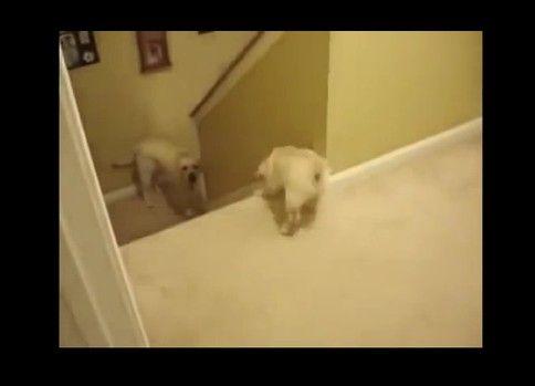 子供に階段の降り方を教える方法が犬と猫で違いすぎると話題に