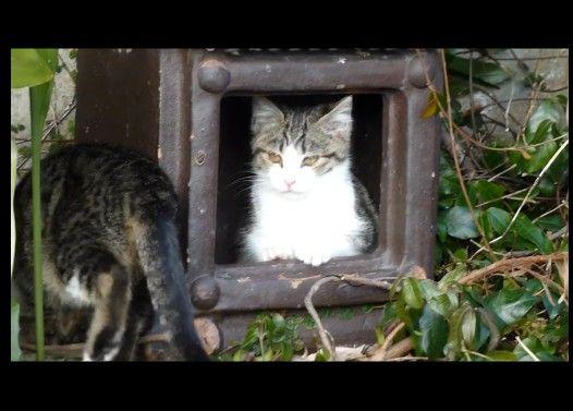 暇を持て余した子猫たちの遊び