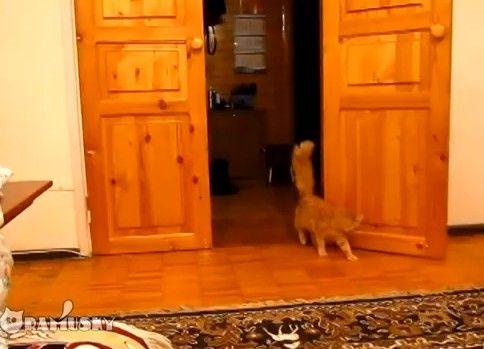 猫にスーパーマリオのBGMを聞かせると面白いことが起こる