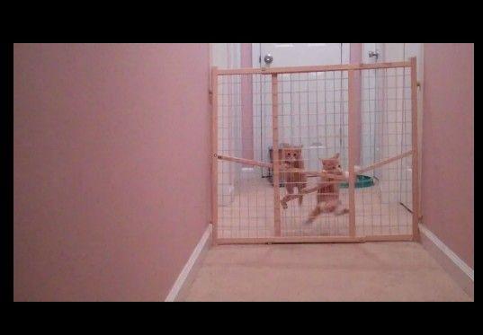 【がんばれ!がんばれ!】仔猫の脱出大作戦