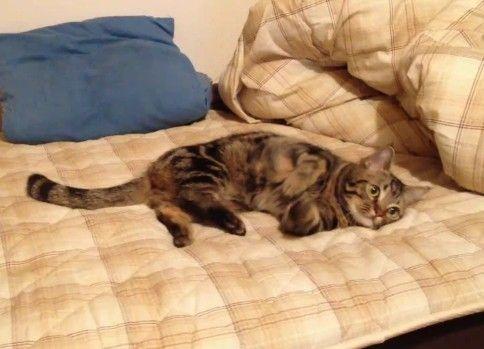 気持ち悪い動きの猫