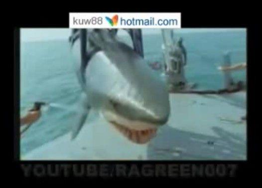 サメを捕まえたら口の中から