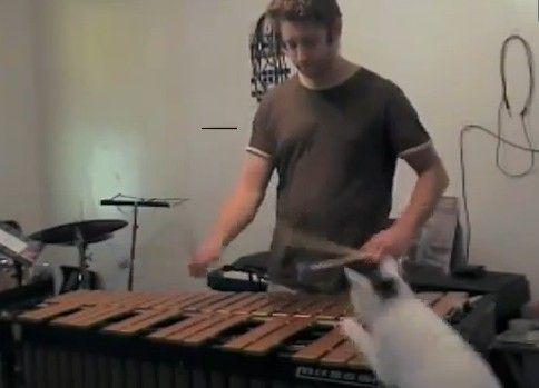 猫が半端じゃなく邪魔だけど木琴みたいな楽器弾いてみた