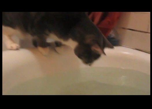 水面に映る自分の姿に興味を持つ猫→風呂に落ちる