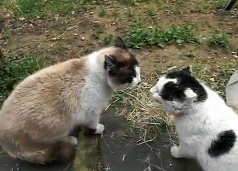 猫の喧嘩【喋ってる】