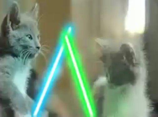 ライトセーバーで戦う子猫