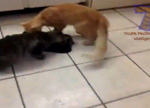 エサを取ったり取られたり、猫パンチされたりする動物達