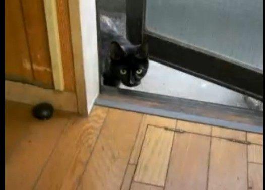 勝手口を開けるとまさに勝手に入ってきてミャアミャア鳴くどこかの猫