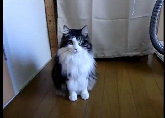 かわいいネコ、おもち 「あま〜い声でおへんじするよ!」