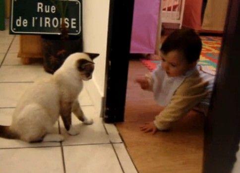 赤ちゃんに猫だましする猫