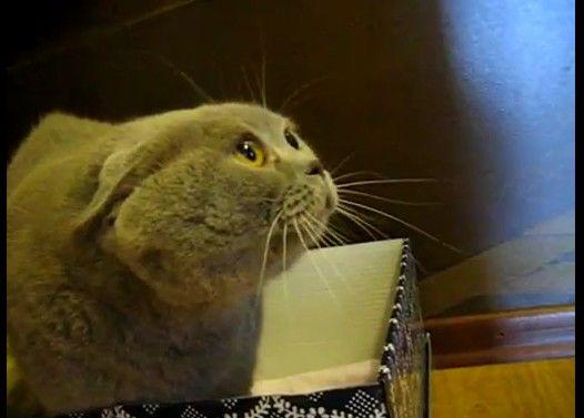 猫語で何かを話している猫