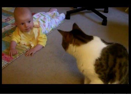 赤ちゃんに体をスリスリする猫