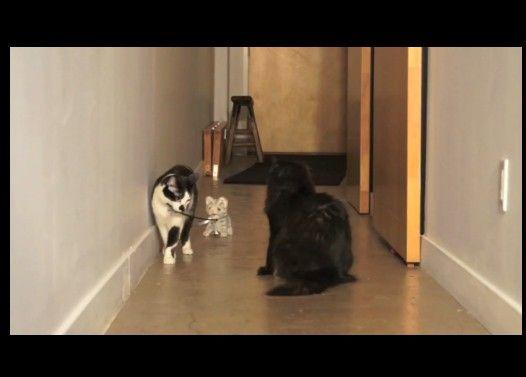 ぬいぐるみを散歩させる猫