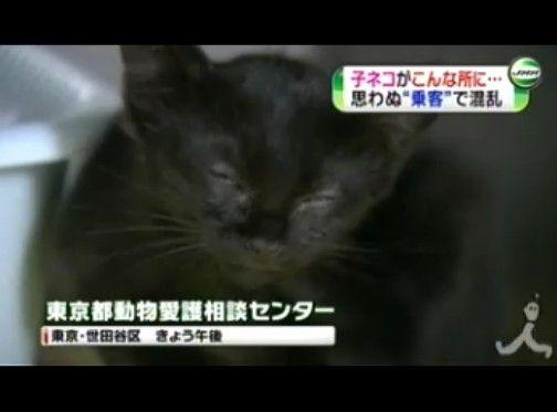 床下からネコ鳴き声、京浜東北線に遅れ