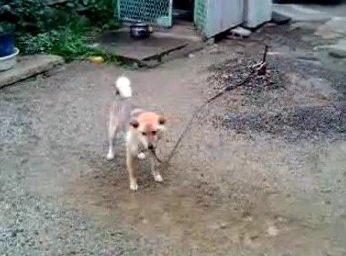 下手糞な犬
