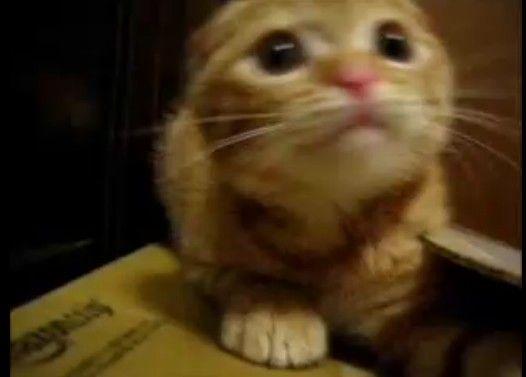 スーパーサイヤ猫 vs フリーザ様