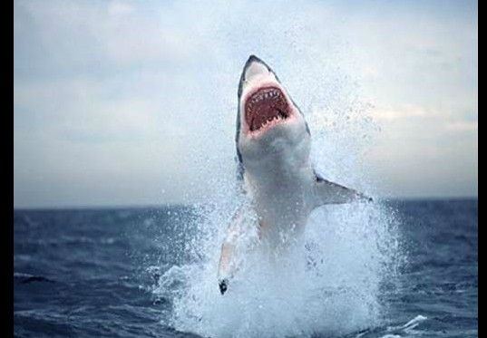 泳いでいる時に遭遇したくない魚