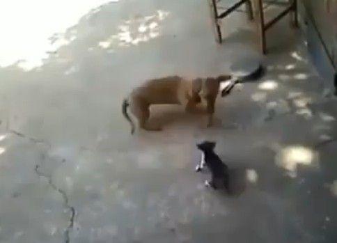 ワンちゃんと子猫のじゃれ合いに母ちゃん来襲