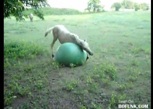 馬にバランスボールを与えた