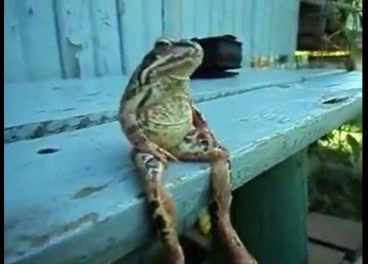 カエルが人生に疲れてしまったようで