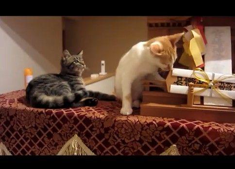 神棚を噛むネコと注意するネコ