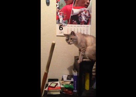 竹刀が舐めたくて仕方ない猫