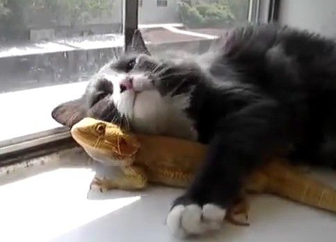 猫と巨大トカゲの ひなたぼっこ