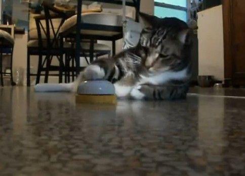 ベルを鳴らして餌を要求する猫